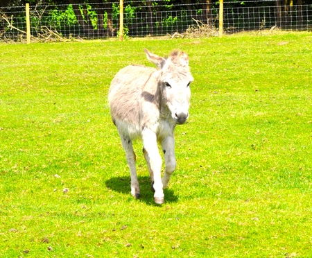 Rescue donkey at St Catherine's Farm