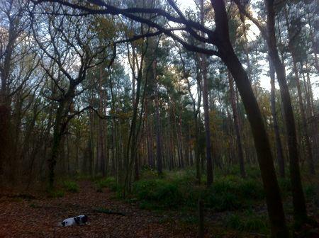Tiddesley Wood, Pershore